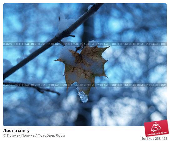 Лист в снегу, фото № 238428, снято 30 октября 2006 г. (c) Примак Полина / Фотобанк Лори