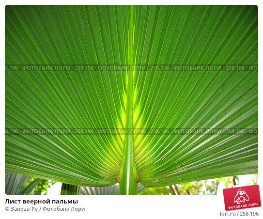 Лист веерной пальмы, фото № 258196, снято 12 апреля 2008 г. (c) Заноза-Ру / Фотобанк Лори