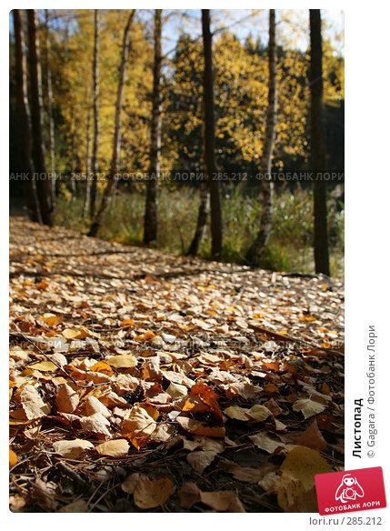 Листопад, эксклюзивное фото № 285212, снято 7 октября 2007 г. (c) Gagara / Фотобанк Лори