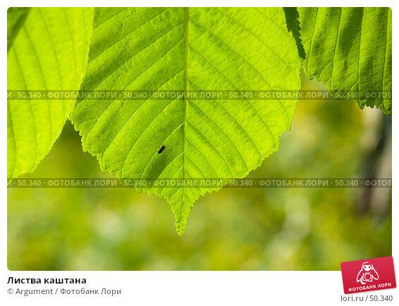 Листва каштана, фото № 50340, снято 27 мая 2007 г. (c) Argument / Фотобанк Лори