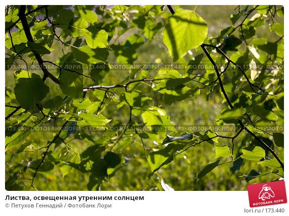 Купить «Листва, освещенная утренним солнцем», фото № 173440, снято 26 мая 2007 г. (c) Петухов Геннадий / Фотобанк Лори
