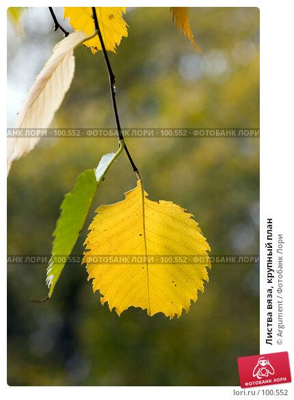 Листва вяза, крупный план, фото № 100552, снято 7 октября 2007 г. (c) Argument / Фотобанк Лори