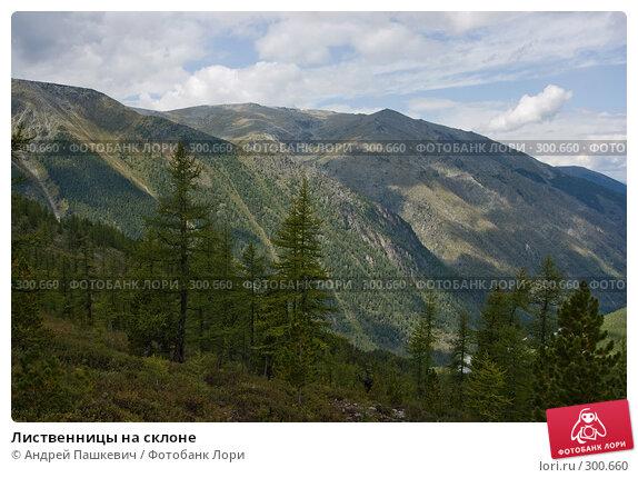 Лиственницы на склоне, фото № 300660, снято 23 апреля 2017 г. (c) Андрей Пашкевич / Фотобанк Лори