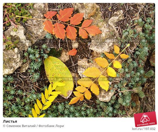 Листья, фото № 197032, снято 21 октября 2016 г. (c) Семенюк Виталий / Фотобанк Лори
