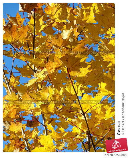 Листья, фото № 256888, снято 9 декабря 2016 г. (c) ElenArt / Фотобанк Лори