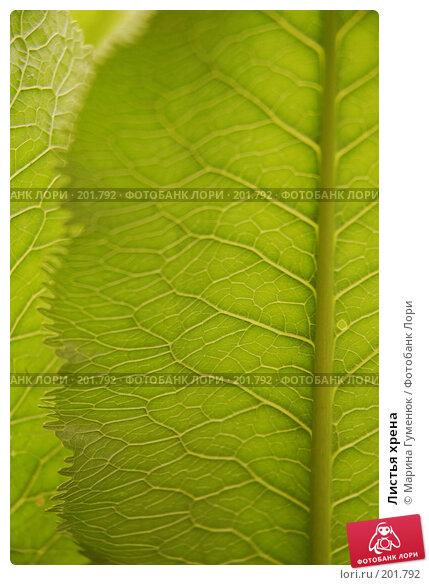 Купить «Листья хрена», фото № 201792, снято 9 сентября 2006 г. (c) Марина Гуменюк / Фотобанк Лори