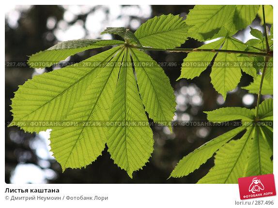 Листья каштана, эксклюзивное фото № 287496, снято 20 апреля 2008 г. (c) Дмитрий Неумоин / Фотобанк Лори