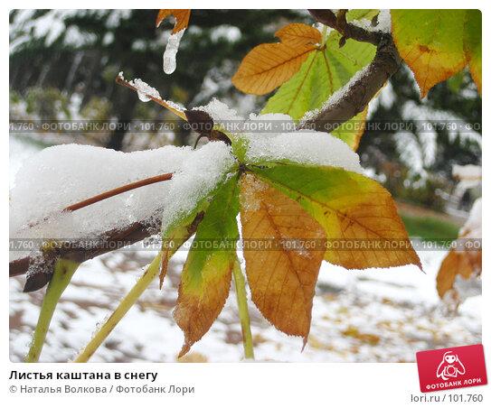 Листья каштана в снегу, фото № 101760, снято 16 октября 2007 г. (c) Наталья Волкова / Фотобанк Лори