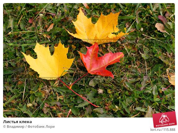 Листья клена, фото № 115888, снято 5 октября 2005 г. (c) Владимир / Фотобанк Лори
