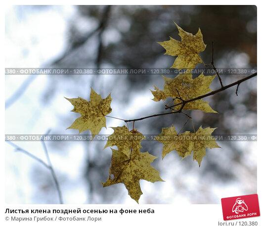 Купить «Листья клена поздней осенью на фоне неба», фото № 120380, снято 28 октября 2007 г. (c) Марина Грибок / Фотобанк Лори