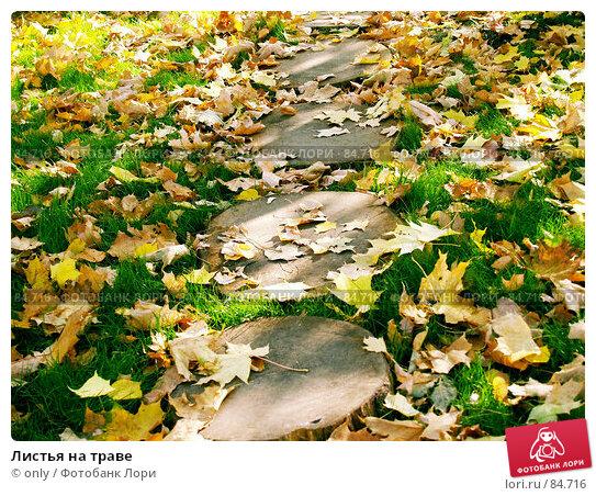 Листья на траве, фото № 84716, снято 28 октября 2016 г. (c) only / Фотобанк Лори