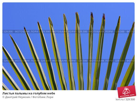Листья пальмы на голубом небе, эксклюзивное фото № 329500, снято 1 мая 2008 г. (c) Дмитрий Неумоин / Фотобанк Лори