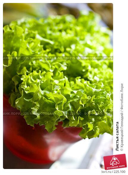 Листья салата, фото № 225100, снято 21 мая 2005 г. (c) Кравецкий Геннадий / Фотобанк Лори