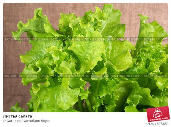 Купить «Листья салата», фото № 307880, снято 31 мая 2008 г. (c) Goruppa / Фотобанк Лори