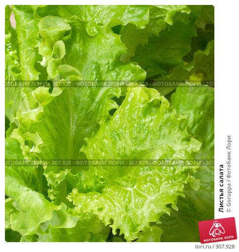 Листья салата, фото № 307928, снято 31 мая 2008 г. (c) Goruppa / Фотобанк Лори
