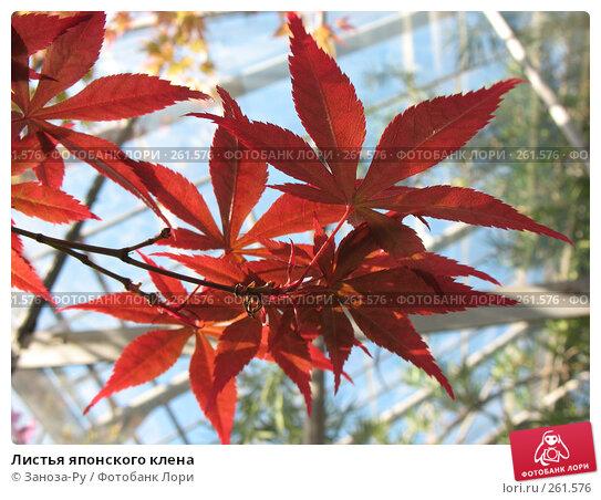Купить «Листья японского клена», фото № 261576, снято 12 апреля 2008 г. (c) Заноза-Ру / Фотобанк Лори