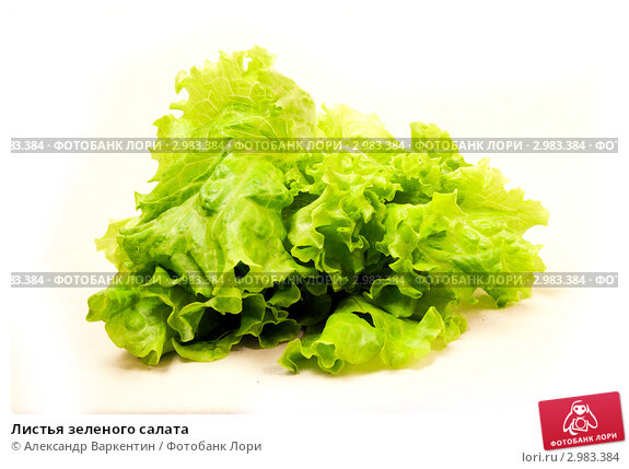 Листья зеленого салата. Стоковое фото, фотограф Александр Варкентин / Фотобанк Лори