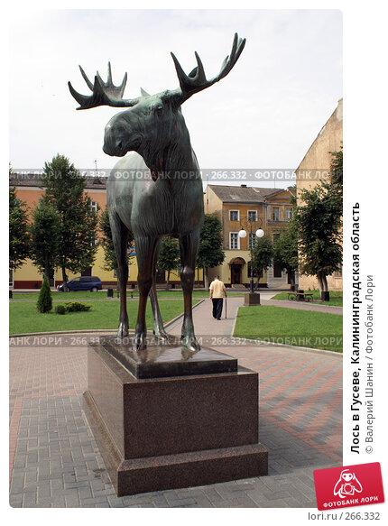 Лось в Гусеве, Калининградская область, фото № 266332, снято 27 июля 2007 г. (c) Валерий Шанин / Фотобанк Лори