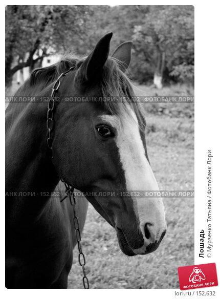 Купить «Лошадь», фото № 152632, снято 13 сентября 2007 г. (c) Мурзенко Татьяна / Фотобанк Лори