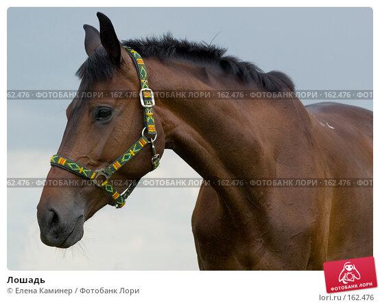 Купить «Лошадь», фото № 162476, снято 1 июля 2007 г. (c) Елена Каминер / Фотобанк Лори