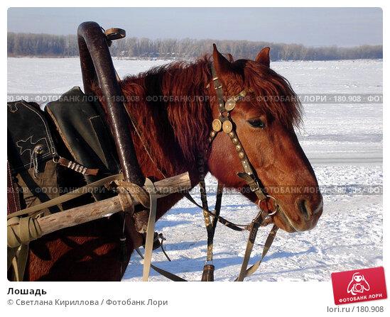 Лошадь, фото № 180908, снято 20 января 2008 г. (c) Светлана Кириллова / Фотобанк Лори