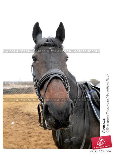 Лошадь, фото № 235584, снято 12 марта 2007 г. (c) Екатерина Тимонова / Фотобанк Лори