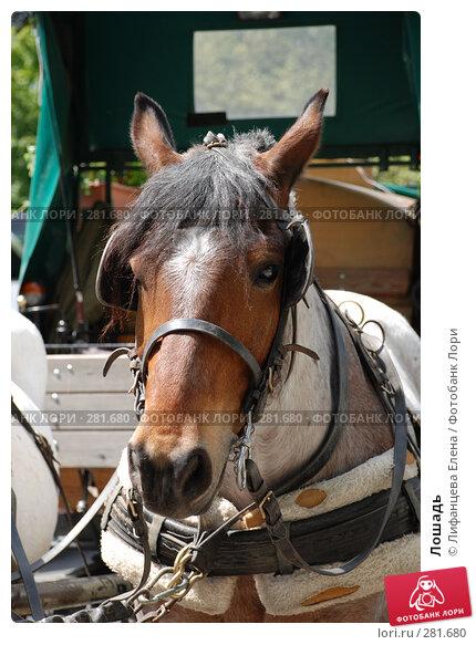 Лошадь, фото № 281680, снято 1 мая 2008 г. (c) Лифанцева Елена / Фотобанк Лори