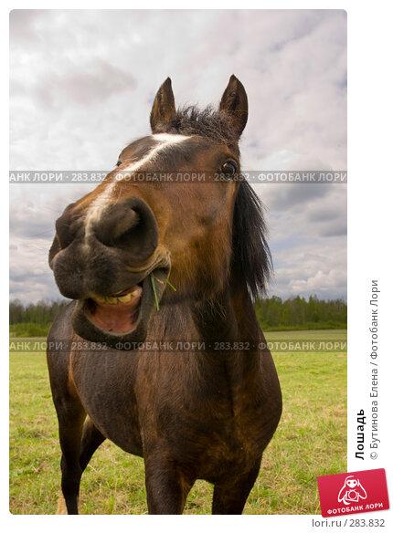 Лошадь, фото № 283832, снято 10 мая 2008 г. (c) Бутинова Елена / Фотобанк Лори