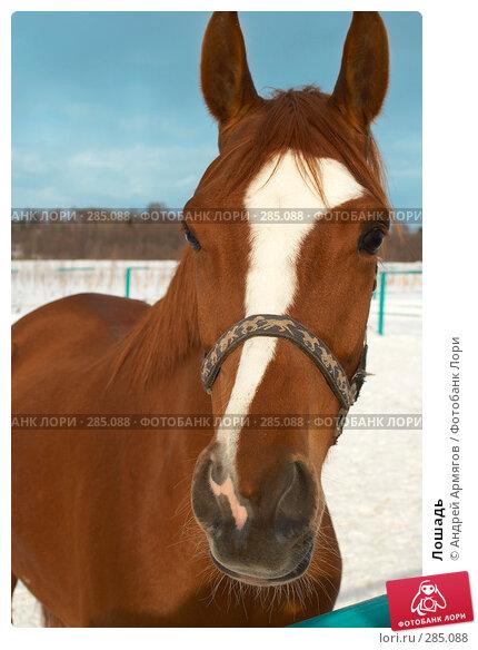 Купить «Лошадь», фото № 285088, снято 24 марта 2006 г. (c) Андрей Армягов / Фотобанк Лори