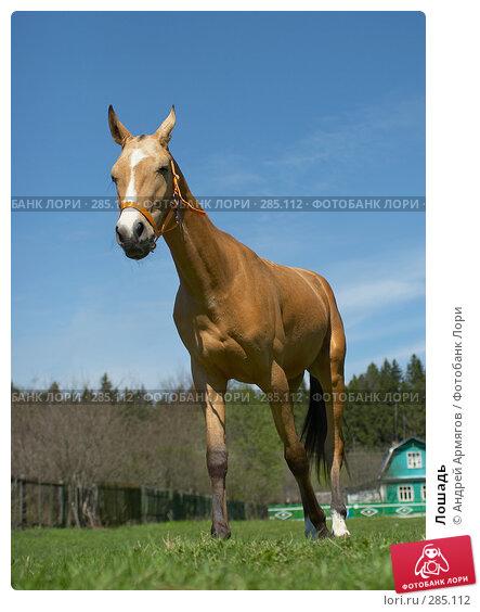 Лошадь, фото № 285112, снято 18 мая 2006 г. (c) Андрей Армягов / Фотобанк Лори