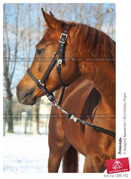 Купить «Лошадь», фото № 285152, снято 30 января 2007 г. (c) Андрей Армягов / Фотобанк Лори