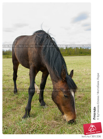 Лошадь, фото № 301536, снято 10 мая 2008 г. (c) Бутинова Елена / Фотобанк Лори