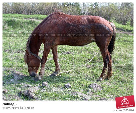 Лошадь, фото № 325824, снято 5 мая 2005 г. (c) sav / Фотобанк Лори