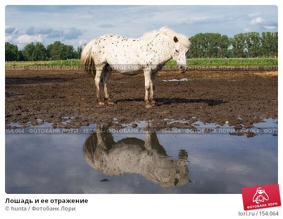 Лошадь и ее отражение, фото № 154064, снято 24 июня 2007 г. (c) hunta / Фотобанк Лори