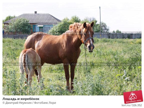 Лошадь и жеребёнок, эксклюзивное фото № 326352, снято 12 июня 2008 г. (c) Дмитрий Неумоин / Фотобанк Лори