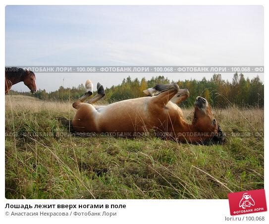 Лошадь лежит вверх ногами в поле, фото № 100068, снято 26 сентября 2007 г. (c) Анастасия Некрасова / Фотобанк Лори