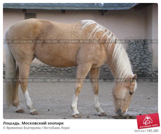 Лошадь. Московский зоопарк, фото № 185280, снято 1 января 2008 г. (c) Яременко Екатерина / Фотобанк Лори