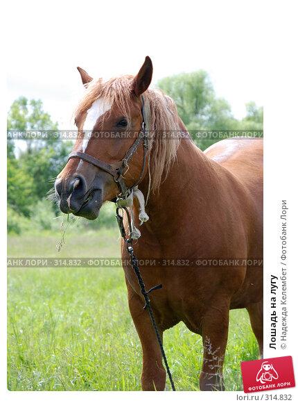 Лошадь на лугу, фото № 314832, снято 10 июня 2007 г. (c) Надежда Келембет / Фотобанк Лори