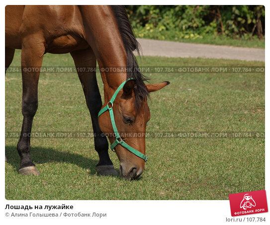 Лошадь на лужайке, фото № 107784, снято 7 сентября 2007 г. (c) Алина Голышева / Фотобанк Лори