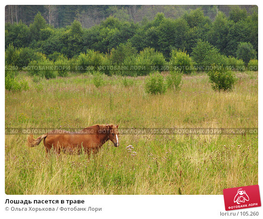 Лошадь пасется в траве, фото № 105260, снято 28 мая 2017 г. (c) Ольга Хорькова / Фотобанк Лори