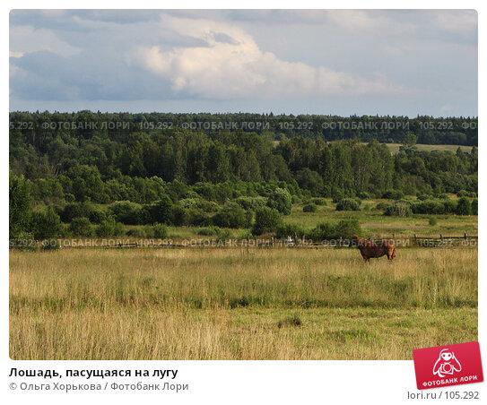 Лошадь, пасущаяся на лугу, фото № 105292, снято 23 января 2017 г. (c) Ольга Хорькова / Фотобанк Лори