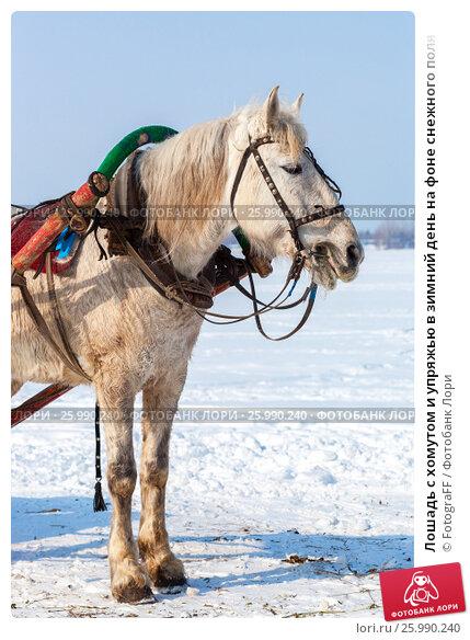Купить «Лошадь с хомутом и упряжью в зимний день на фоне снежного поля», фото № 25990240, снято 23 апреля 2019 г. (c) FotograFF / Фотобанк Лори