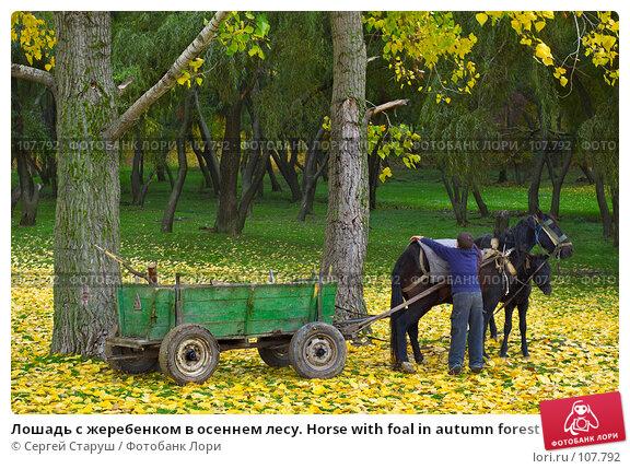 Лошадь с жеребенком в осеннем лесу. Horse with foal in autumn forest, фото № 107792, снято 28 октября 2007 г. (c) Сергей Старуш / Фотобанк Лори