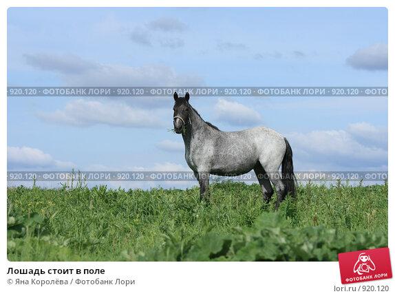 Купить «Лошадь стоит в поле», фото № 920120, снято 14 июня 2009 г. (c) Яна Королёва / Фотобанк Лори