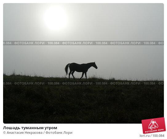 Лошадь туманным утром, фото № 100084, снято 30 сентября 2007 г. (c) Анастасия Некрасова / Фотобанк Лори