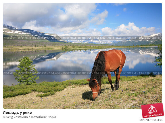 Лошадь у реки, фото № 134436, снято 30 июня 2006 г. (c) Serg Zastavkin / Фотобанк Лори