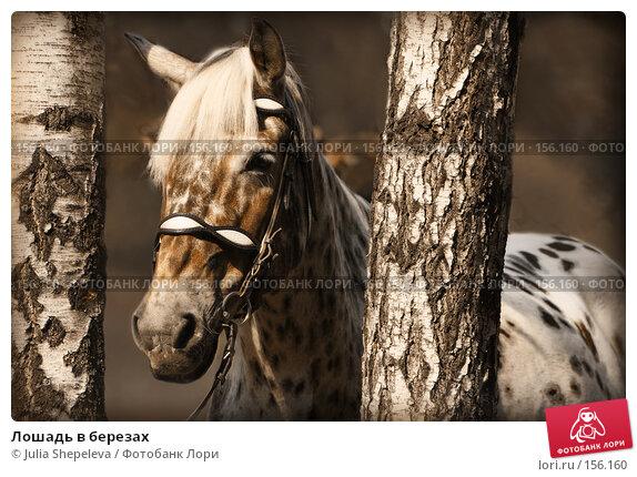 Лошадь в березах, фото № 156160, снято 22 января 2017 г. (c) Julia Shepeleva / Фотобанк Лори