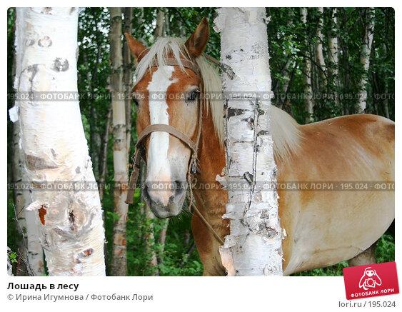 Купить «Лошадь в лесу», фото № 195024, снято 17 июля 2005 г. (c) Ирина Игумнова / Фотобанк Лори