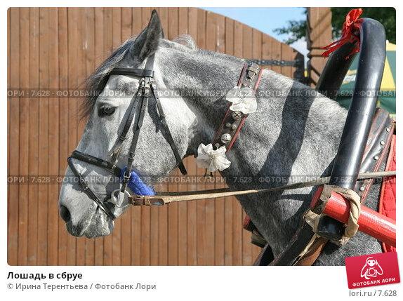 Лошадь в сбруе, эксклюзивное фото № 7628, снято 1 июня 2006 г. (c) Ирина Терентьева / Фотобанк Лори