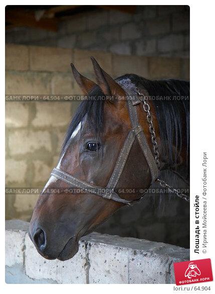 Лошадь в стойле, эксклюзивное фото № 64904, снято 17 июня 2007 г. (c) Ирина Мойсеева / Фотобанк Лори